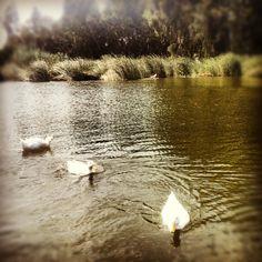 Πάρκο Περιβαλλοντικής Ευαισθητοποίησης «Αντώνης Τρίτσης» στην πόλη Ίλιον, Αττική