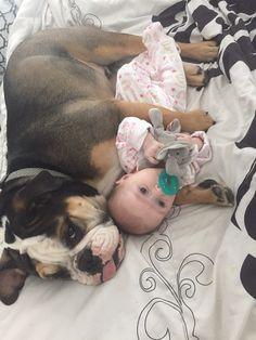 English bulldog baby girl puppy dog and baby best friends animals puppies