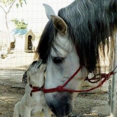 Very sweet cute animals images, cute baby animals, animal pictures, funny animals, Horses And Dogs, Animals And Pets, Baby Animals, Dogs And Puppies, Funny Animals, Cute Animals, Animals Images, Doggies, Funny Cats