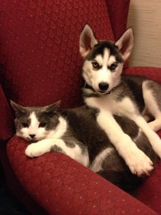 """""""WHY IS HIS PAW ON ME ME? WHY???"""" 