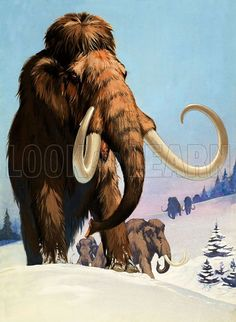 Mammoths of the Ice Age - Look and Learn History Picture Library