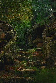 L'immagine può contenere: pianta, albero, spazio all'aperto e natura