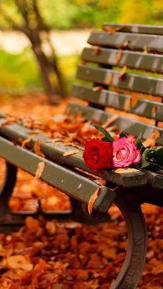 My muna photos! Studio Background Images, Photo Background Images, Photo Backgrounds, Beautiful Flowers Wallpapers, Beautiful Nature Wallpaper, Beautiful Landscapes, Autumn Scenery, Autumn Trees, Autumn Photography