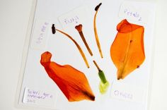 Laminate a flower (in pieces) and label to show the different parts.