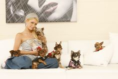 Paris Hilton and her small dogs http://celebnco.com/8-most-charming-pets-of-celebrities/7/