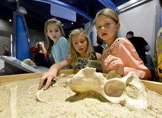 Children examine a skull at the Discovery Children's Museum