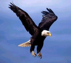 Time to throw down some F bombs and soar like an eagle.