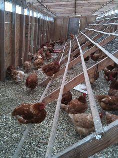 Amazing Chicken Coop Design Ideas #chickencoop #chickencoops #chickenhome #chicken #chickencage #chickenpen #chcikencoopplans #chickencoopideas #chickencoopdiy #chcikencoopplans