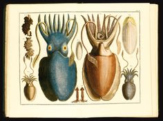 seba albertus locupletissimi rerum   zoology   sotheby's l13401lot6vtn3en
