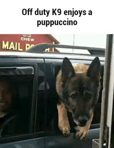 Puppuccino is my new favorite word funny pics, funny gifs, funny videos, funny memes, funny jokes. LOL Pics app is for iOS, Android, iPhone, iPod, iPad, Tablet