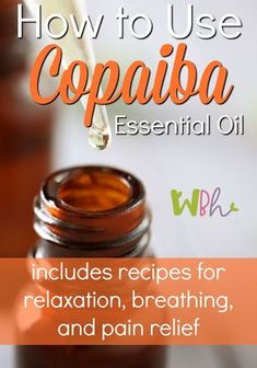 Copaiba essential oil is definitely a workhorse. It's great for pain relief, reduction of inflammation, skin care, and respiratory issues. In fact, it is one of the most anti-inflammatory oils that exists. #copaibaessentialoil #essentialoils #aromatherapy #wellnessbecomesher
