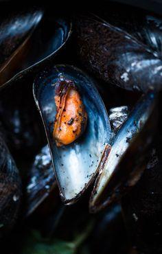 Miesmuscheln mit Kaffee und Minze | Mussels Foodphotography | Foodporn | Nur 5 Zutaten Blog