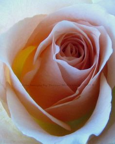 Soft peach colored rosebud Simple Beauty by LifeImagesByTeresaMc, $25.00