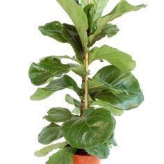 Comment r cup rer un cactus malade et ou bouturer un cactus plantes pinte - Tableau vegetal jardiland ...