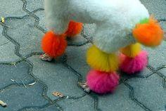 Dye their hair! 15 Creative Ways Dogs Get Our Attention! http://www.buzzfeed.com/h2/pinn/milkbone/15-creative-ways-dogs-get-our-attention