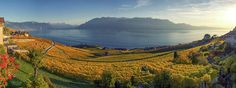 Panorama On Lavaux Region, Vaud, Switzerland Photograph by Elenarts - Elena Duvernay photo