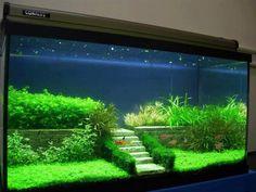 Decor: Planted aquarium design with a stone wall and stairs Planted Aquarium, Aquarium Terrarium, Garden Terrarium, Aquarium Garden, Aquarium Aquascape, Aquascaping, Aquarium Design, Aquarium Setup, Aquarium Lighting