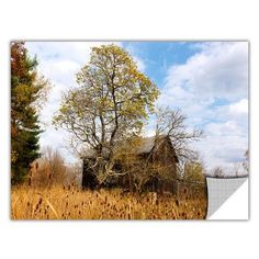 "ArtWall ArtApeelz 'CVNP Barn' by Cody York Photographic Print Removable Wall Decal Size: 16"" H x 24"" W x 0.1"" D"