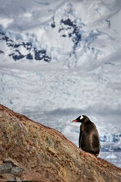 A Perfect Day in Paradise Bay Antarctica | The Planet D