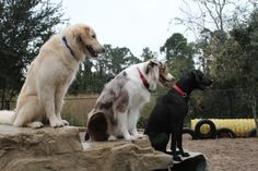 We are not a doggy daycare.... We are an ENRICHMENT CENTER! We do training throughout the day with all dogs who come to the University of Doglando! Everyone gets some training at Doglando, even our humans!