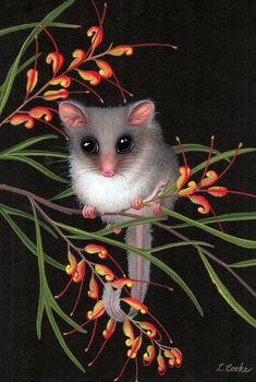 """Australian Feathertail Glider on Grevillea Flowers"" by Lyn Cooke Australian Wildflowers, Australian Native Flowers, Australian Art, Australian Garden, Arte Floral, Motif Floral, Animals And Pets, Cute Animals, Australia Animals"