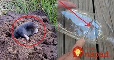 Môj trik, ako vyhnať zo záhrady krtkov: Bez chémie a nestojí to ani cent!
