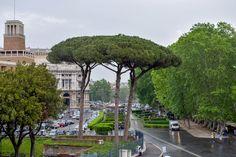 https://flic.kr/p/27pKtfF | Italian Stone Pine - Landscape, Rome Italy