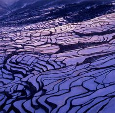 2011 'Yuanyang in April', artist Sun Jingbo (b1945, Mouping County, Shandong Province, China)