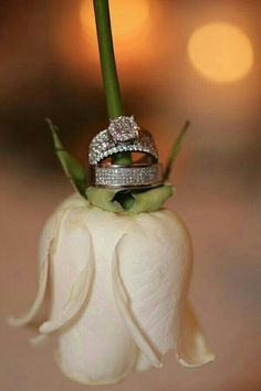 Our wedding rings. Picture idea 🙂 Our wedding rings. Wedding Couple Poses, Pre Wedding Photoshoot, Wedding Shoot, Wedding Couples, Our Wedding, Wedding Bands, Wedding Scene, Church Wedding, Luxury Wedding
