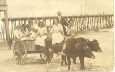 Collection of Violet Cropper Davis  A ride on an oxen-drawn cart was a pleasurable treat for those who vacationed at Ocean City.  This 1912 photograph shows guests of the Belmont Hotel enjoying a ride along the surf.