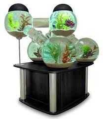 aquárioS - Pesquisa Google