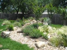 Dry Creek Bed with feather grass, salvia, and crepe myrtle trees.