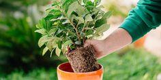 5 μυστικά για μεταφύτευση φυτών σε γλάστρα Crafts Beautiful, Diy Flowers, Beautiful Pictures, Youtube, Home And Garden, Herbs, Backyard, Nature, Plants