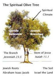 The Spiritual Olive Tree