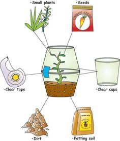 LooLeDo - a hands on science and enrichment program - outline and ideas