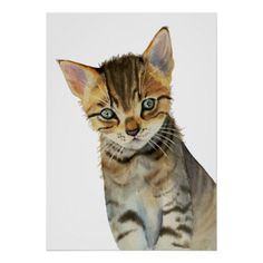 European Shorthair Kitten Watercolor Painting Poster - diy cyo customize create your own personalize