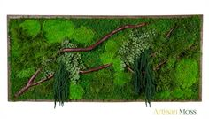 """40"""" x 18"""" Real Preserved Plants in Reclaimed Wood Frame & Red Barked Branches. LARGE Plant Painting- No Care Green Wall Art."""