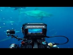 Sweet Mother Of God This Great White Shark Is The Stuff Of Nightmares, At Over 20 Feet Long, Is Likely To Be The Largest Ever Filmed! | Shock Mansion