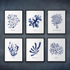 Coastal art, Seaweed watercolor painting, Set of 6, Beach house decor, Bathroom decor, Blue and white wall decor, Blue seaweed print set
