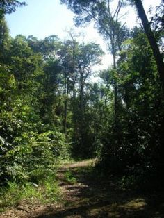 With careful management, selectively logged tropical Amazonian forests can recover their carbon stocks within a cutting cycle of 20 to 30 years, according to researchers. The findings show that sustainably logged tropical forests continue to play a key role in global carbon sequestration, with important implications for global climate. Carbon Sequestration, Carbon Cycle, Tropical Forest, Global Warming, 30 Years, Forests, Climate Change, Woodland, Environment