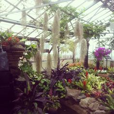 Allan Gardens on a rainy Saturday - still a getaway in the downtown core, escaping away from the city!