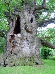ideas oak tree bonsai plants for 2019 Weird Trees, Spooky Trees, Dame Nature, Tree Faces, Unique Trees, Old Trees, Nature Tree, Tree Art, Amazing Nature