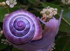 http://ueberschriftennews.blogspot.com/2012/11/fugelschlag-der-angst-von-brigitte.html  Violet Tasmanian snail