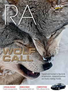 RoyalAuto, April, 2016. #Wolf #Wolves