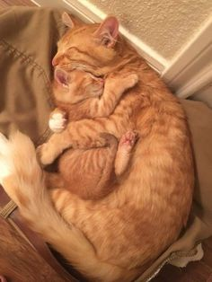 Click the Photo For More Adorable and Cute Cat Videos and Photos - Adorable Cats and Cute Kittens - Katzen Bilder Cute Little Animals, Cute Funny Animals, Funny Cats, Cute Cats And Kittens, I Love Cats, Adorable Kittens, Images Of Cute Kittens, Kittens Cutest Baby, Cute Baby Cats