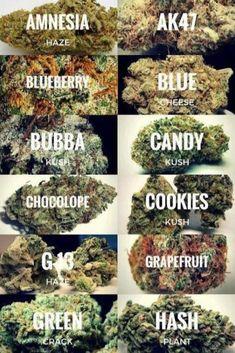Ganja Mantras & Cannabis History in Religion Marijuana Plants, Cannabis Plant, Cannabis Edibles, Ganja, Weed Types, Weed Strains, Weed Pictures, Weed Art, Weed Humor