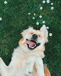 Cool Beagle Chubby Adorable Dog - 1ee70cf39258c68dbc39a200a0b68dbf  Pic_48319  .jpg