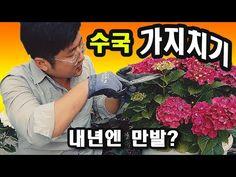 Interior Garden, Herb Garden, Comic Books, Youtube, Flowers, Plants, Gardening, Gardens, Hydrangeas