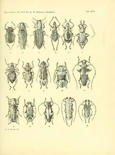 Coleoptera - BioStor