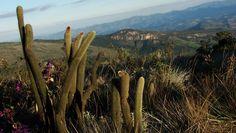 Sete destinos rurais que oferecem turismo sustentável no Brasil  Roteiros de Norte a Sul para quem deseja explorar a natureza e as culturas regionais   parque-estadual--ibitipoca- mg-minas-gerais (Foto: Flickr/ Marina Dutra Miranda)